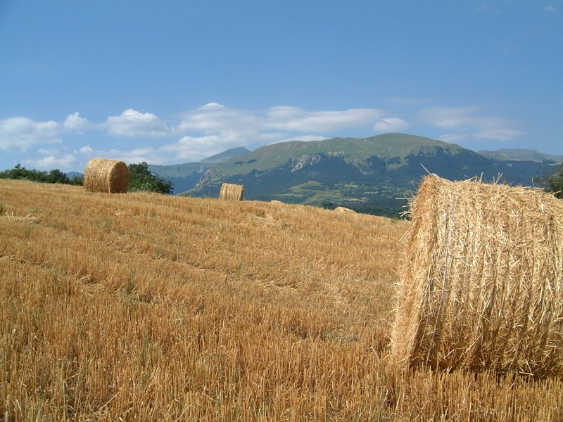 Cut hay in the Sibillini - Photo © Deborah Swain