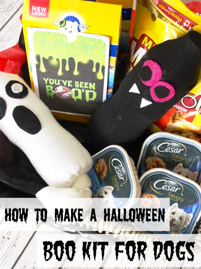 How to Make a Halloween Boo Kit for Dogs