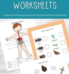Printable Science Worksheets for Kids [ 1135 x 735 Pixel ]