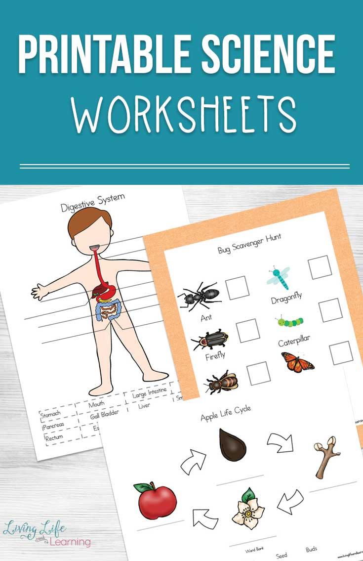 medium resolution of Printable Science Worksheets for Kids