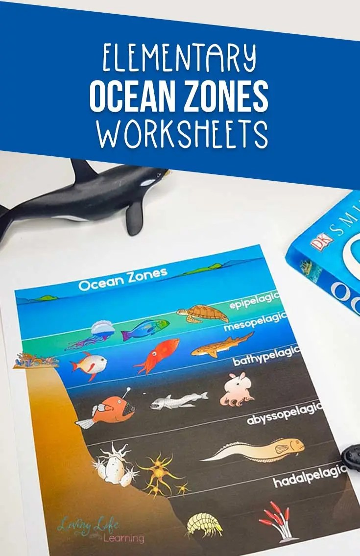 hight resolution of Ocean Zones Worksheets for Kids