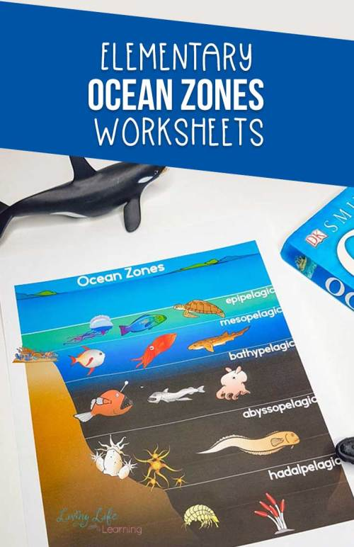small resolution of Ocean Zones Worksheets for Kids