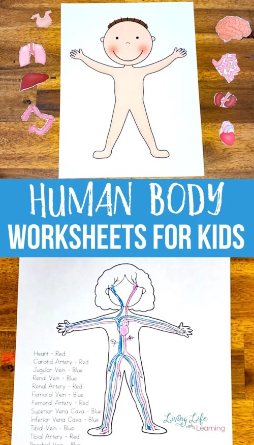 small resolution of Human Body Worksheets for Kids