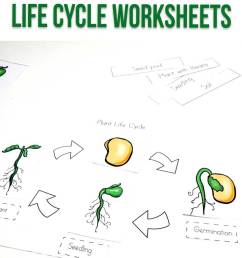 Plant Life Cycle Worksheets for Kids [ 1200 x 735 Pixel ]