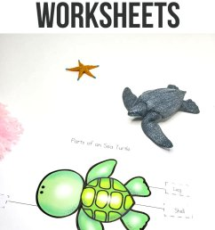 Sea Turtle Life Cycle Worksheets for Kids [ 1290 x 735 Pixel ]