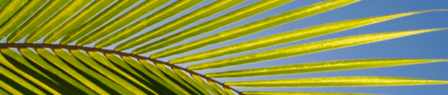 Palm Sunday – Lesson 18 – Choose Your Crowd