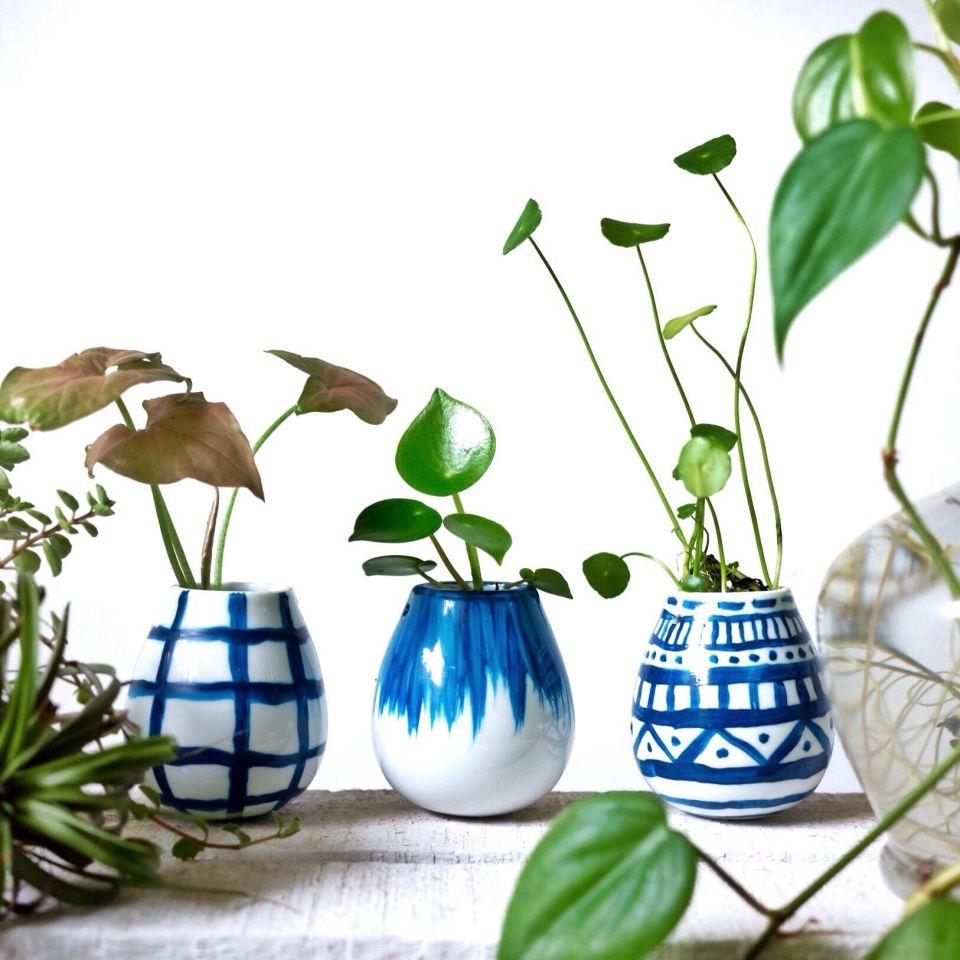 tips-merawat-tanaman-rangga-kusuma-living-loving-4