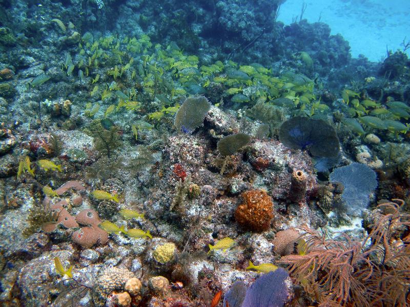 andros bahamas coral reef