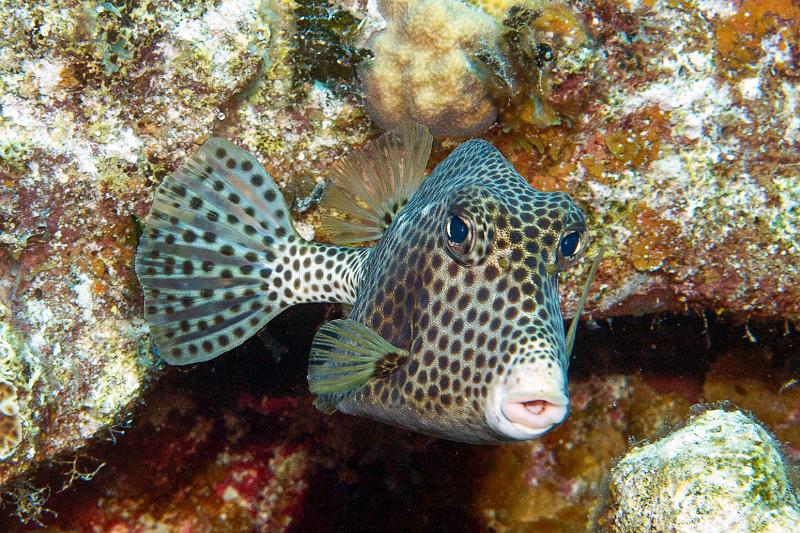 inaguas bahamas coral reef