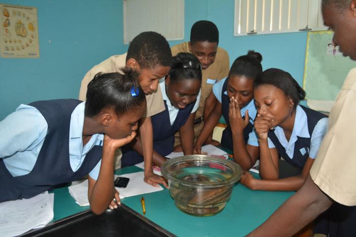 JAMIN Spring 2016 Photos Jamaica Mangrove Education
