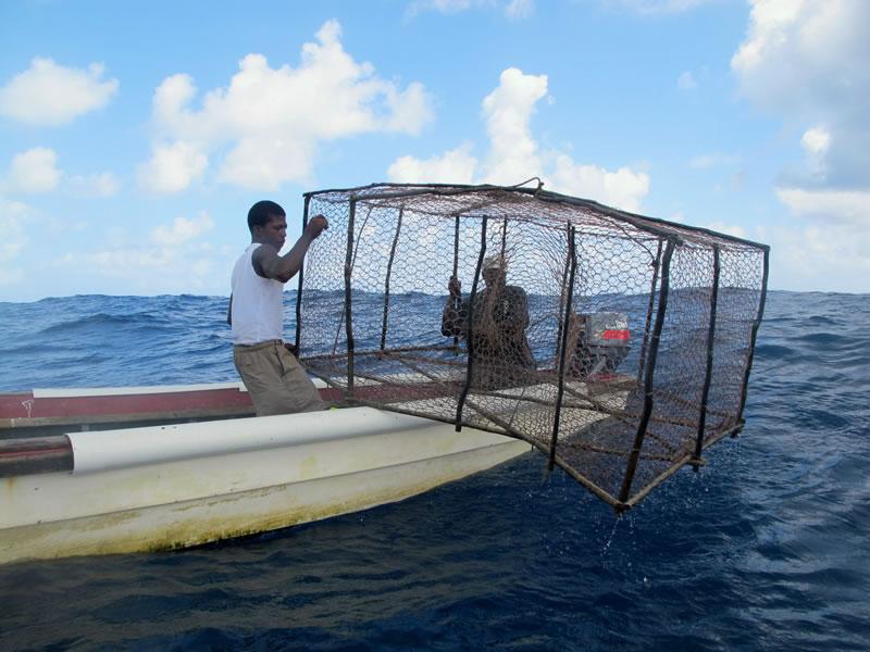 Restoring Jamaicas Pedro Banks KSLOF Living Oceans