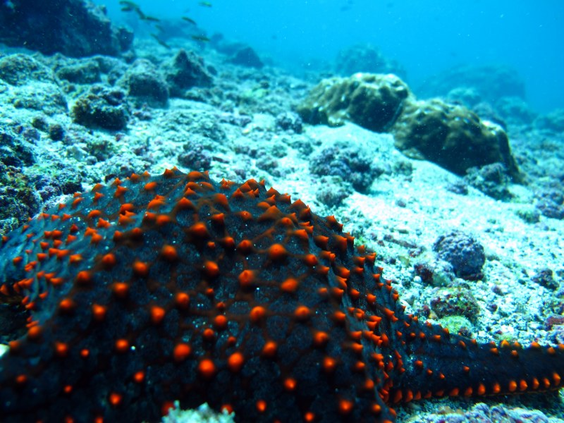 Sea Stars and Beautiful Starfish Images  Living Oceans