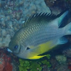 Living Room Borders How I Decorate My Small Reef Fish Images - Oceans Foundationliving ...