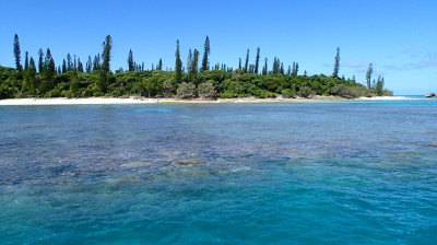 Rare Columnar Pine Trees Of Isle Of Pines Ill Des Pins New CaledoniaLiving Oceans Foundation