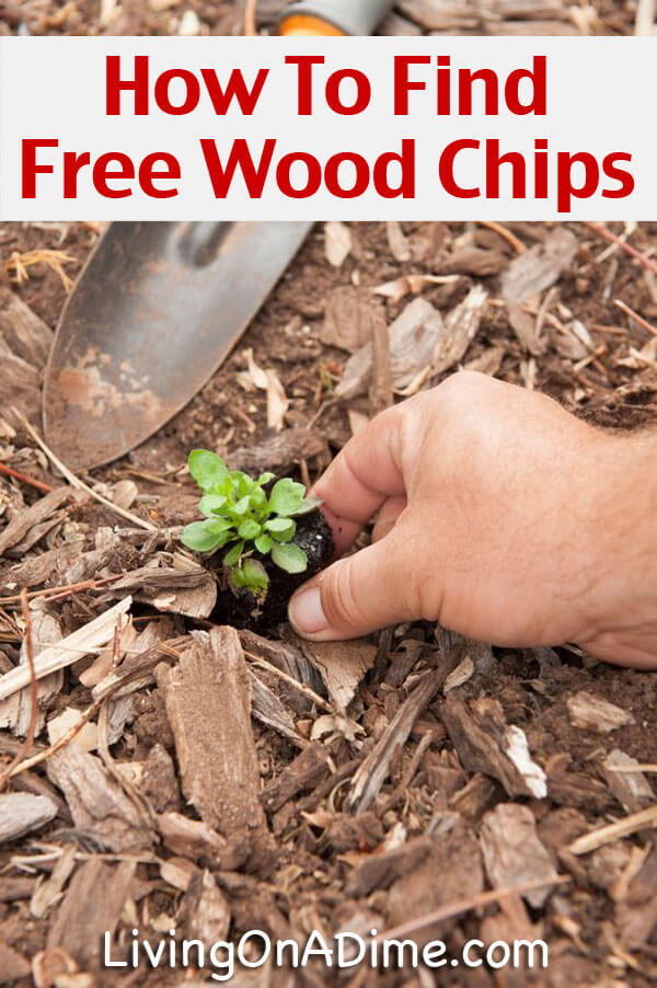 free wood chips mulch