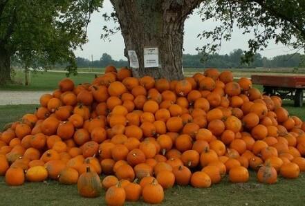 Fall Desktop Wallpaper With Pumpkins Buy Pumpkins After Halloween Living On A Dime