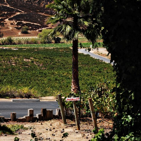 Living on Saltwater - Travels to California  - Vineyards