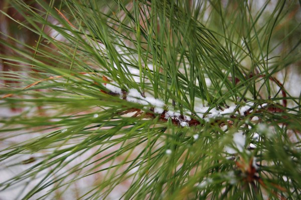 Living on Saltwater - Snow - Snowing in the Pines - Snow Day