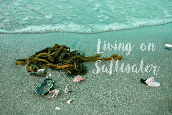 Living on Saltwater - Living on Saltwater Photography
