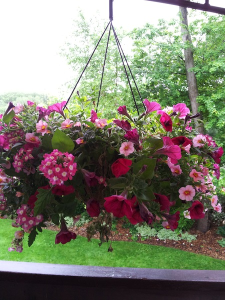 Lowes 50 Off Hanging Flower Baskets Clearance Find Living Rich With CouponsLiving Rich