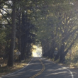 The Story of Reinig Road's Beautiful Sycamore Trees, History Worth Knowing