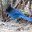 The Birdfeeder Club | Don't you…forget about seeds; identifying birds of the Snoqualmie Valley