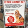 Dogs showing up in more places: breaking down where allowed, pet friendly local businesses