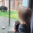 "Ridge Bears |  Bigger, Bolder and Dying Young; Inside the Snoqualmie Ridge ""Bear Summit"""