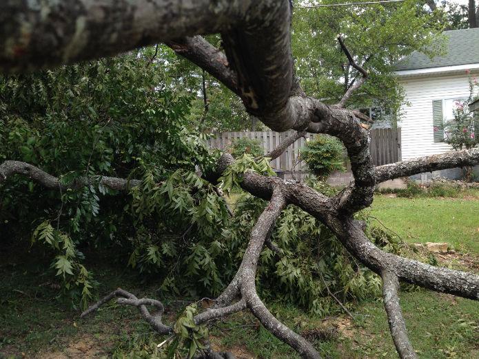 fallen tree branch