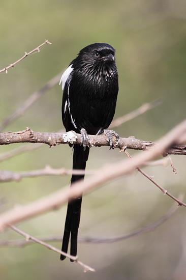 LIVING TRAVEL  EAST AFRICA  TANZANIA SERENGETI  BIRDS