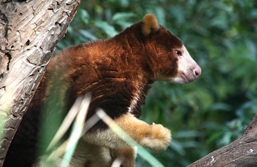 LIVING TRAVEL  AUSTRALIA  Adelaide Zoo at Adelaide and