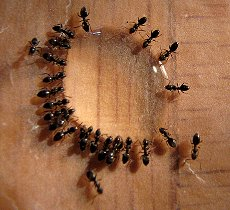 I Recently Test Five Ant Killers Find Out Which One Works Best