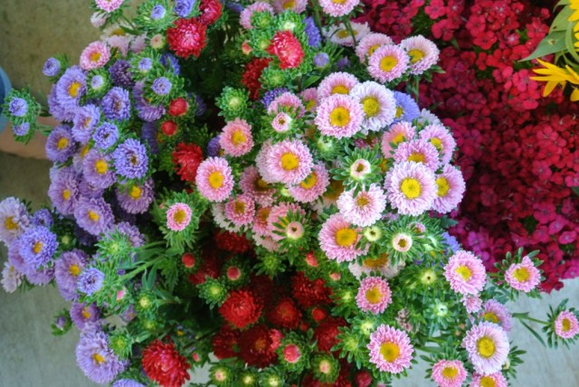mums- Farmers Market with Living With Color Designs