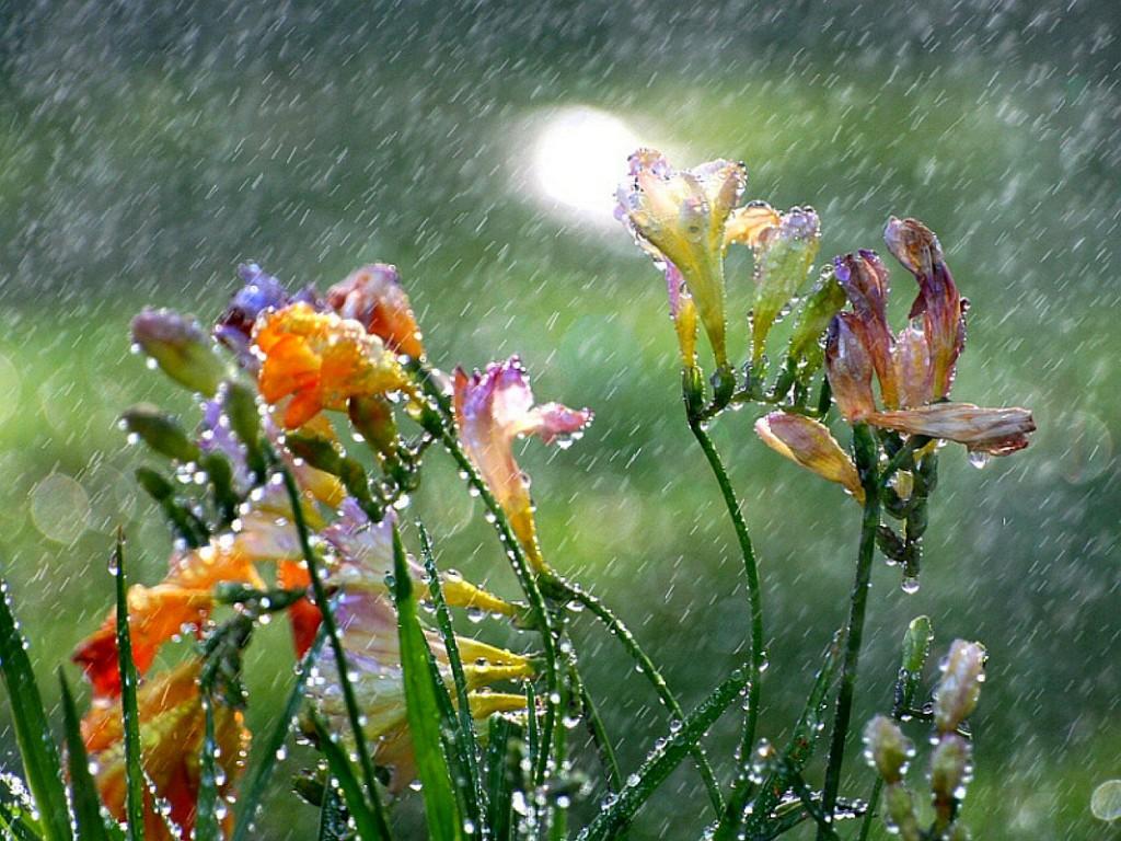 It's Raining Blessings – The Month of Chesvan