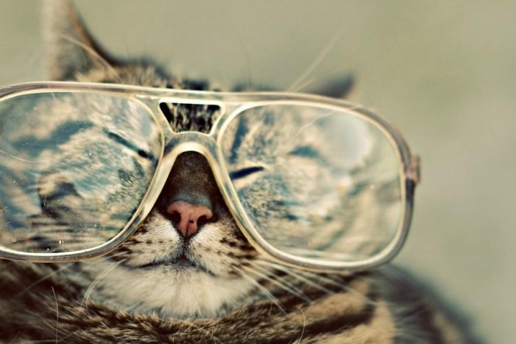 Crazy Funny Cat Pictures HD Wallpaper