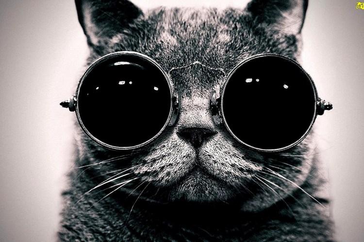 Futurecat