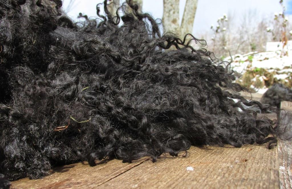 Gotland Gray Curls