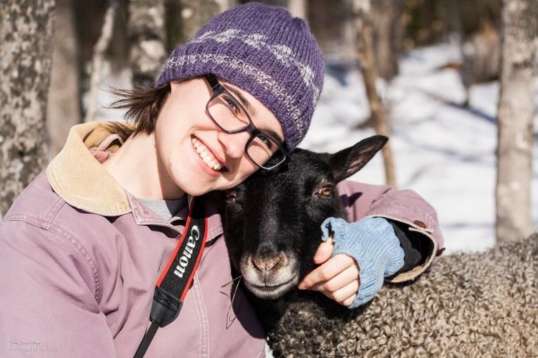 Gotland Sheep in Vermont