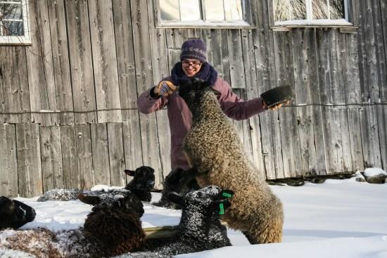 Fun loving Gotlands