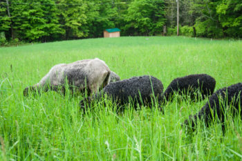 Managing Summer Parasites