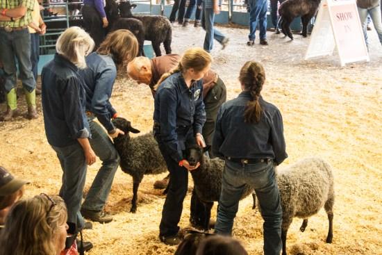 NY Sheep and Wool Festival Sheep Show