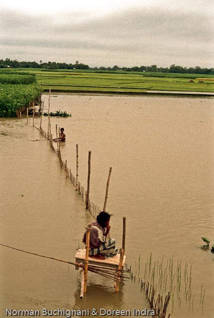River bank erosion and flooding in bangladesh a detailed for Today fishing times