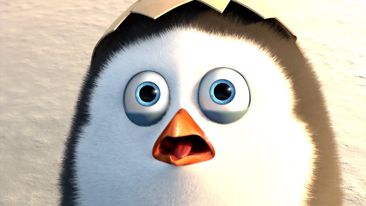 Die Pinguine aus Madagascar Kritik  Review Living