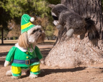 elf movie quotes shihtzu raccoon movie