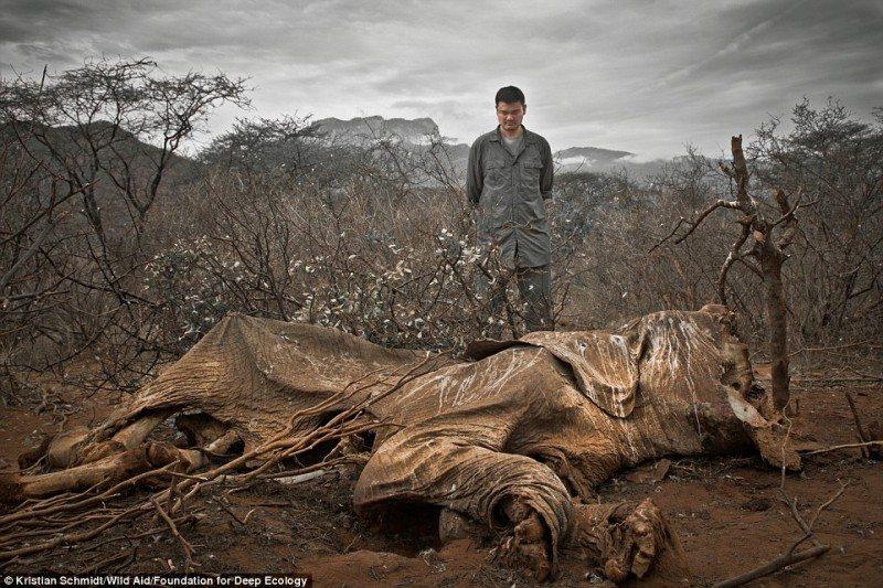 Elefant omorat petru fildes