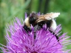 Snuffle Bee