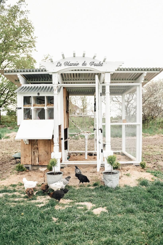 DIY Farmhouse Style Chicken Coop - Liz Marie Blog
