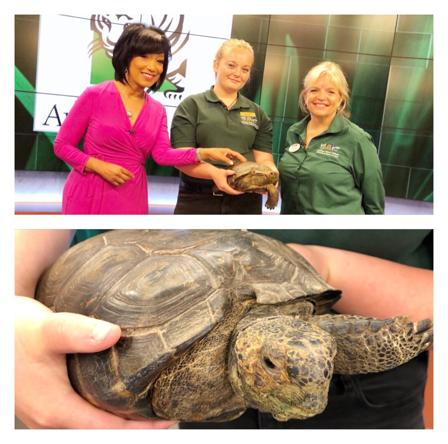 The Tortoise and the Fox 8 News Anchor | LizReyes com