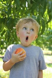 Peach Picking at Eckert's   Ellie And Addie