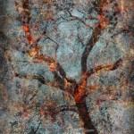 Misted: Digital collage © 2010 Liz Ruest